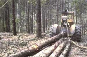 Debusqueur forestier